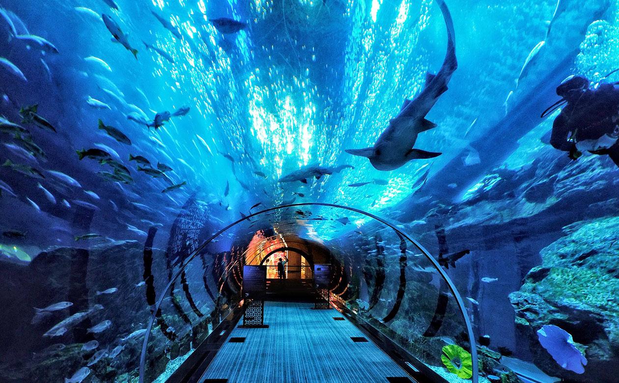 前往世界级的【马尼拉海洋公园】(含第一门票及3馆